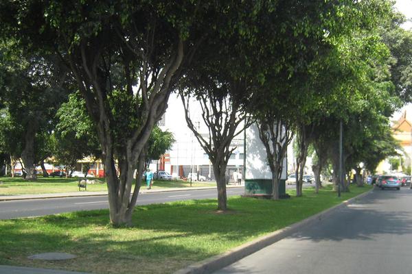 Foto de AV.  CESAR VALLEJO  / FRANCISCO DE ZELA