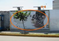Ca. Domingo choquehuanca # 135 Urb. Santa Cruz-V4